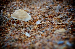 Shell Search
