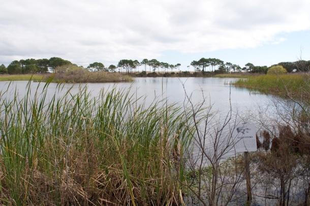 Alligator Lake