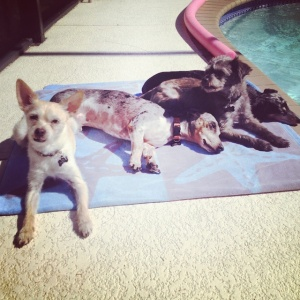 Pool dogs...