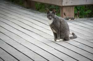 Stray One Eyed Cat