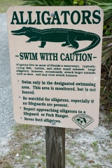 Swim With The Gators