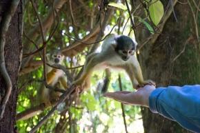 Monkeying Around inMiami